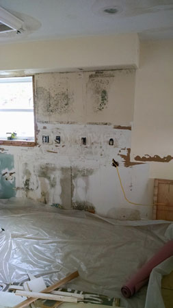 Mold Remediation and Restoration Services