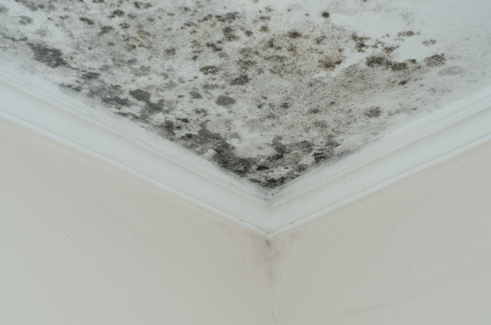 Signs Your House Is Full of Mold